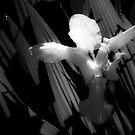 Angel Wings by G. Patrick Colvin