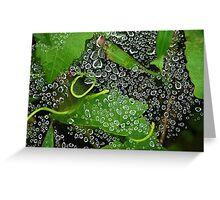 Dew drops! Greeting Card