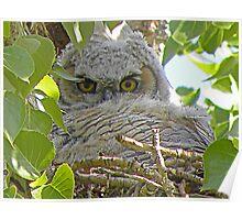 Fuzzy Owlet  Poster