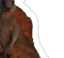 Kangaroos T Sticker