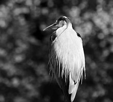 Great Blue Heron by J. Sprink