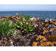 Life on the Rocks Photographic Print