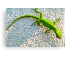 Gecko on The Wall Canvas Print