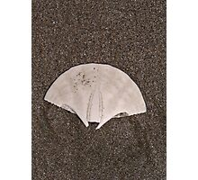 Sand Dollar? Photographic Print