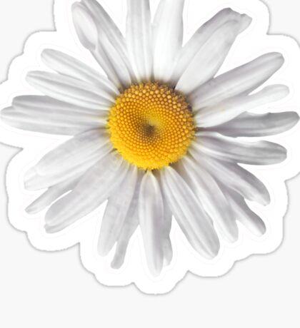 Daisies & Peaches - Daisy Pattern on Pink Sticker