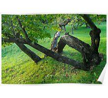 Chestnut tree Poster