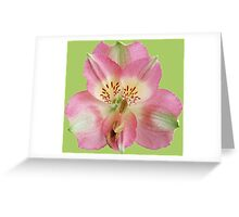Gorgeous tiger lily Greeting Card