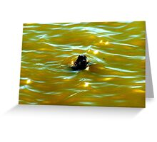 Stick In The Water Greeting Card