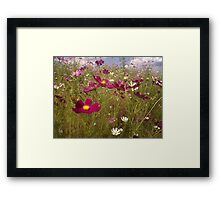 Crawling among the Cosmos Framed Print