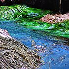Seaweed Swirling by Bob Wall