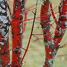 Red Trunks by Catherine Davis