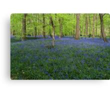 Bluebells Coxsetter's wood  Chiltern hills Canvas Print