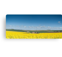 Oil rapeseed Chadley's farm Chiltern Hills  Canvas Print