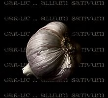 Garlic ~ Allium sativum by Rosalie Dale