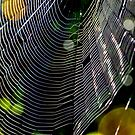 Orb Weaver Web by Deborah V Townsend