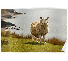 Scotland Sheep at the Beach Poster