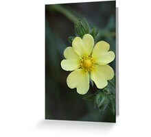 Rough-fruited Cinquefoil Greeting Card