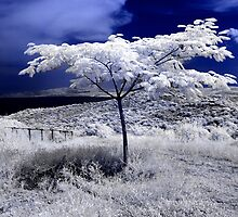 IR lonely tree by makedon