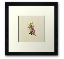 Chic Girly Pink White Vintage Rose Painting  Framed Print