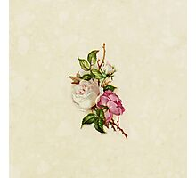 Chic Girly Pink White Vintage Rose Painting  Photographic Print