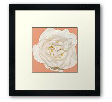 White tender rose Framed Print