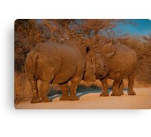 Rhino faceoff, Kruger National Park, South Africa Canvas Print