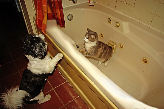 ..what are you doing in my tub..? by Zal Lazkowicz