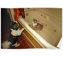 ..what are you doing in my tub..? Poster