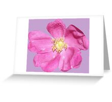 Soft purple flower Greeting Card