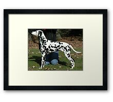 Young Dalmatian Framed Print