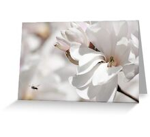 Magnolia...an ancient flower Greeting Card
