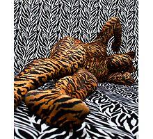 Tiger on Zebra Photographic Print