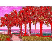 Palm Trees in Red Photographic Print