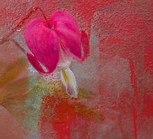 Bleeding Heart by DIANE  FIFIELD