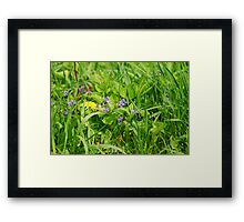 Hiding in the Grass Framed Print