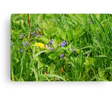 Hiding in the Grass Canvas Print