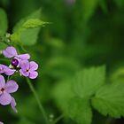 Wild purple phlox by lilcanuk