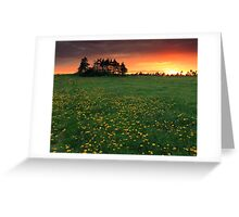 Dandy Sunset Greeting Card