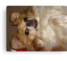 Silly Charlie Canvas Print