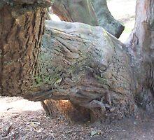 Elephant Face Tree Trunk  by WaleskaL