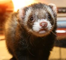 My ferret Rocky.... by LeahsPhotos