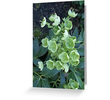 Green Mystery Greeting Card