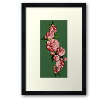 Creeping beautiful flower Framed Print