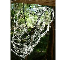 Cotton Web Photographic Print