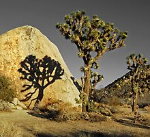 Joshua Tree National Park--shadow/rock by milton ginos