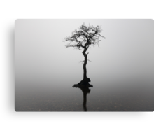 Misty lone tree Canvas Print
