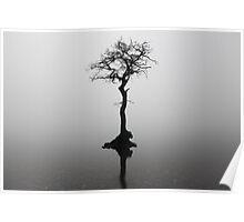 Misty lone tree Poster