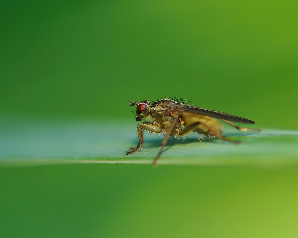 Fly on a Leaf in a Peebles Garden by photobymdavey