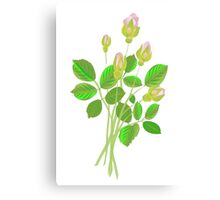 Five Rose Buds Canvas Print