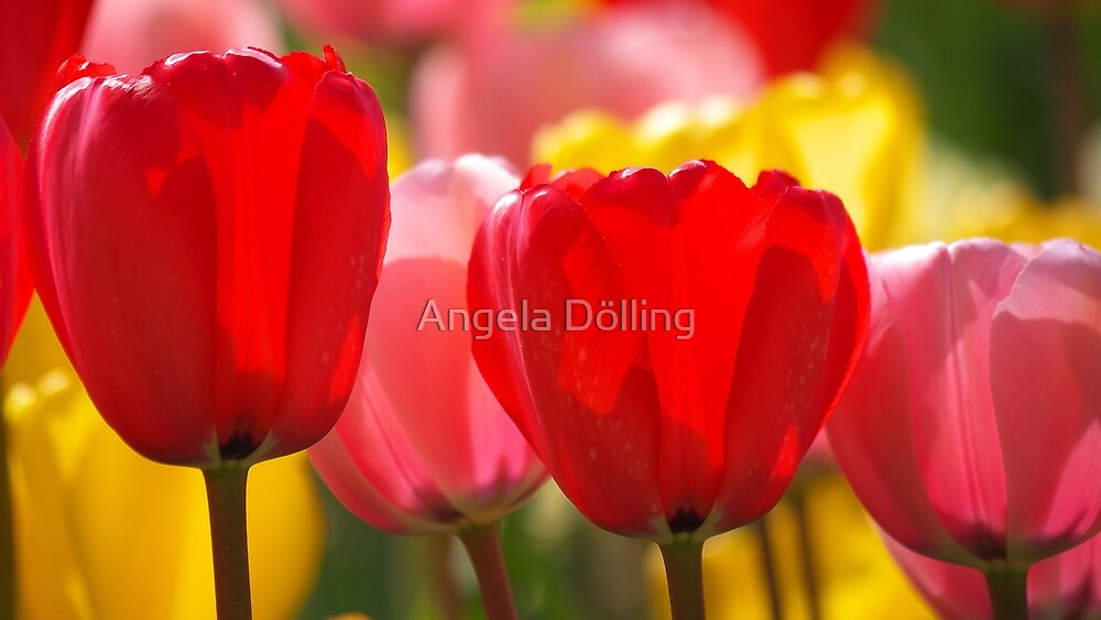 Colors of spring by Angela Dölling